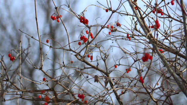 winter-in-my-neighbourhood-a-photo-essay