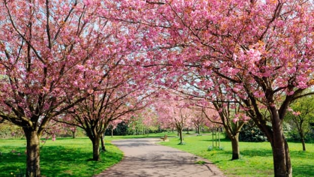 rebirth-of-life-spring-arrives