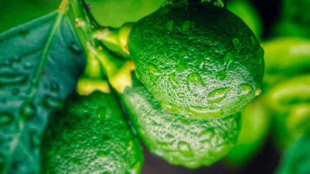 eat-avocado-to-improve-your-eye-health