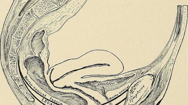 the-postpartum-pelvic-floor