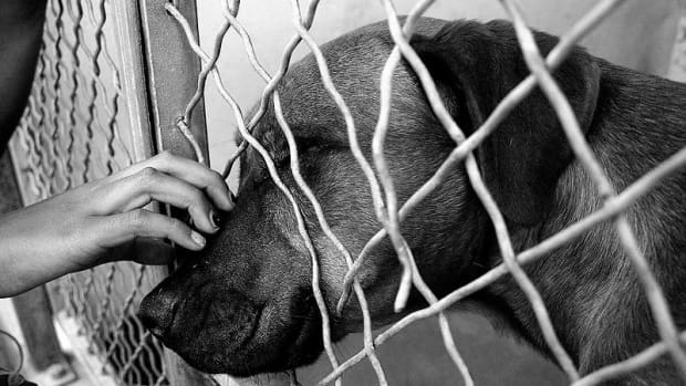 your-guide-to-your-first-shelter-dog