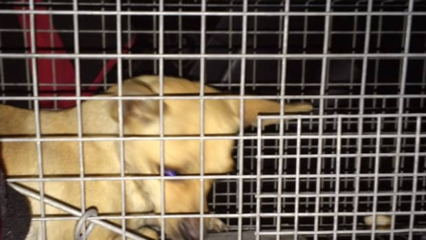 how-a-stop-at-a-liquor-store-saved-the-life-of-a-stray-dog