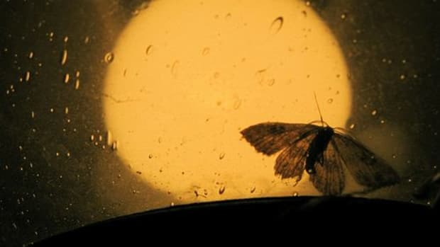 moth-with-flame
