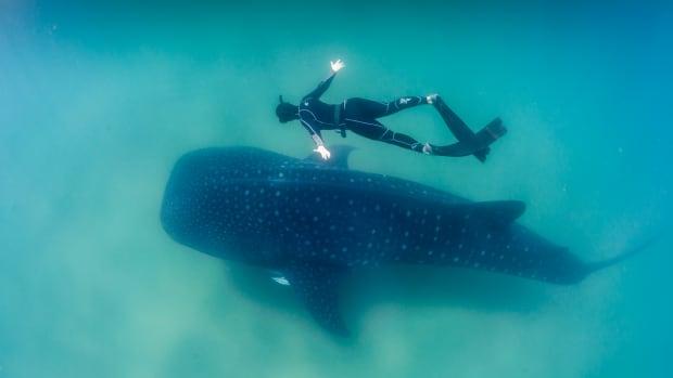 10-common-shark-myths-debunked