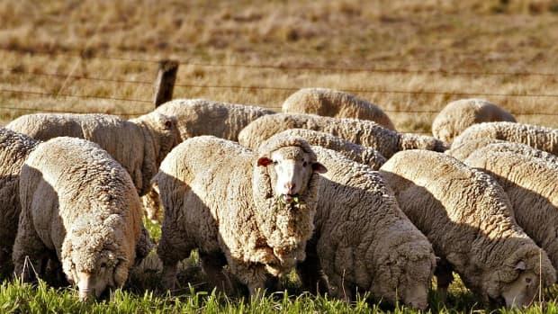 羊毛及其来源
