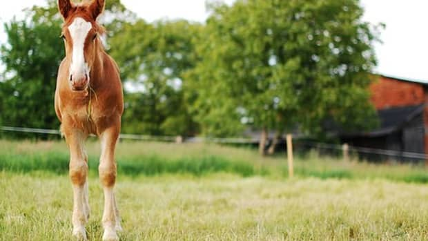 20-fiery-red-names-for-chestnut-horses
