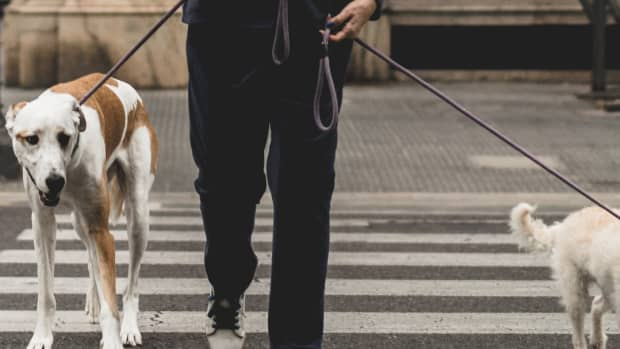 problems-with-pet-leasing