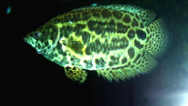 most-colorful-aquarium-fish