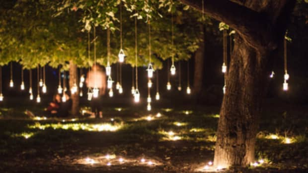 forest-lights-of-mystery