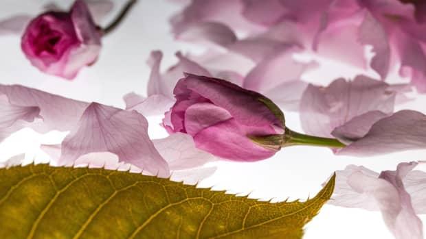 falling-flowers-a-poem