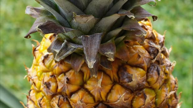 15-unusual-facts-about-the-pineapple