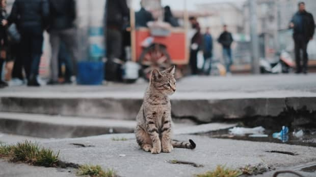 how-to-improve-a-feral-cats-life