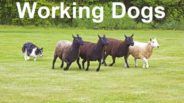 dynamic-dogs-canine-strength-and-stamina