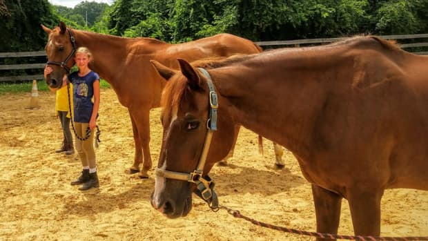 all-about-leasing-a-horse
