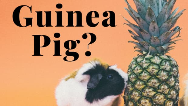 guineapig-name-ideas