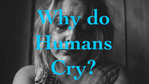 why-do-humans-cry-theories