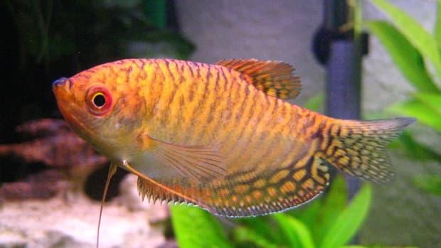 best-fish-small-tank