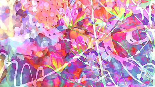 Do you see six magnolias?
