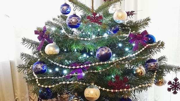how-to-choose-and-care-for-a-living-christmas-tree