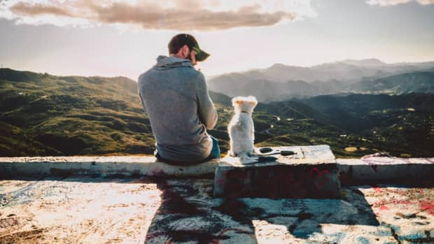 how-mindfulness-with-dogs-can-be-emotionally-healing