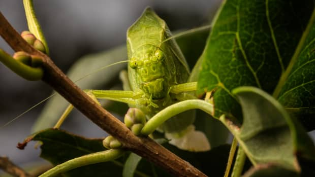 the-brief-interesting-life-of-a-katydid