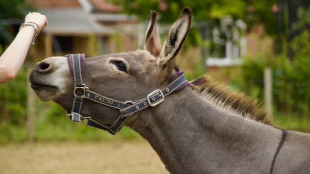 your-first-pet-donkey