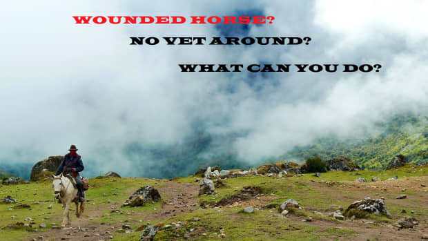 wounded-horse-no-vet-available