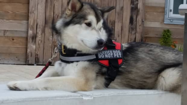 breed-specific-training-for-malamutes