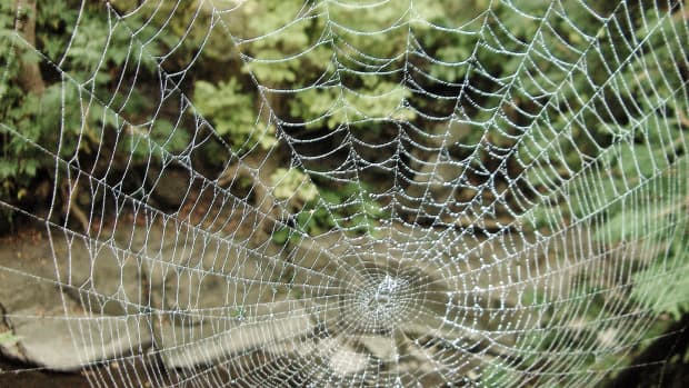 10-super-silky-spider-facts