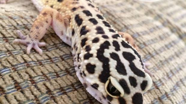 names-for-a-pet-lizard