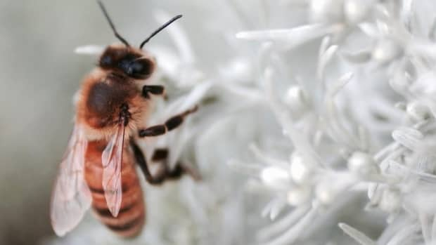 how-do-insects-survive-winter