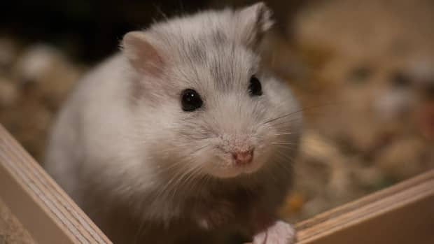 hamster-cages-and-toys