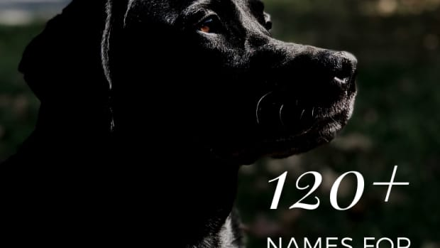 100-best-names-for-black-lab-dogs