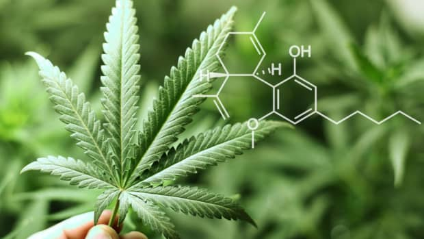 what-is-cbd-oil-and-why-is-it-the-next-big-thing