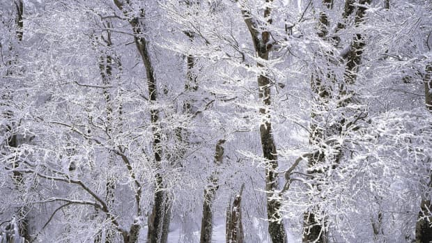 more-tips-to-beat-the-winter-blues