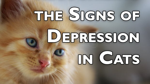 recognizing-the-signs-of-depression-in-cats-how-to-know-if-your-cat-is-depressed