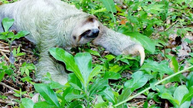 sloth-and-the-weasel-answer-to-a-poetic-challenge