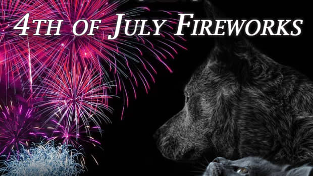 how-to-keep-pets-safe-during-4th-of-july-fireworks