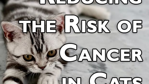 reducing-the-risk-of-cancer-in-cats-how-to-prevent-cancer-in-your-feline-friend