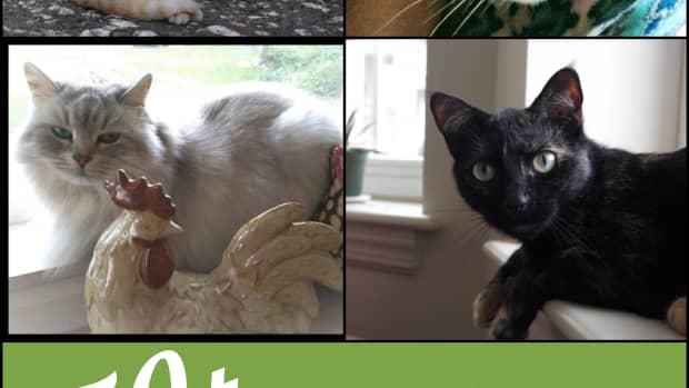 cat-names-inspired-by-rock-music-songs