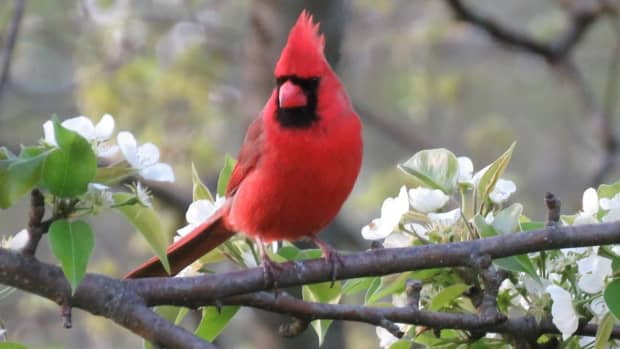common-types-of-backyard-birds-in-the-northeast