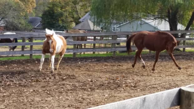 using-horse-jokes-to-spice-up-your-unmounted-horsemanship-lessons