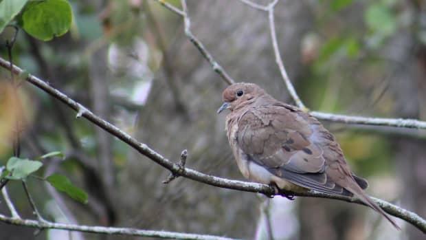 fall-birds-in-kingston-ontario-a-photo-essay