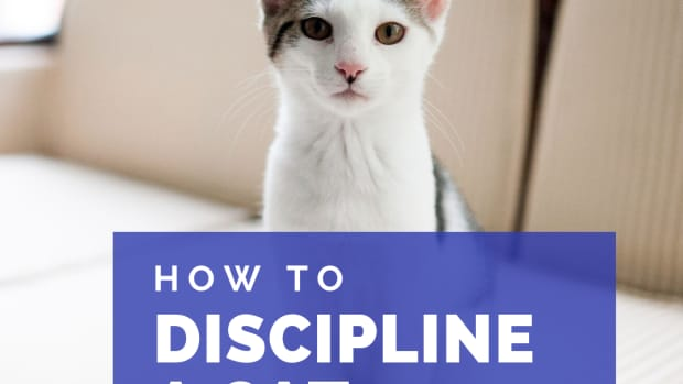 how-to-discipline-your-catthe-right-way