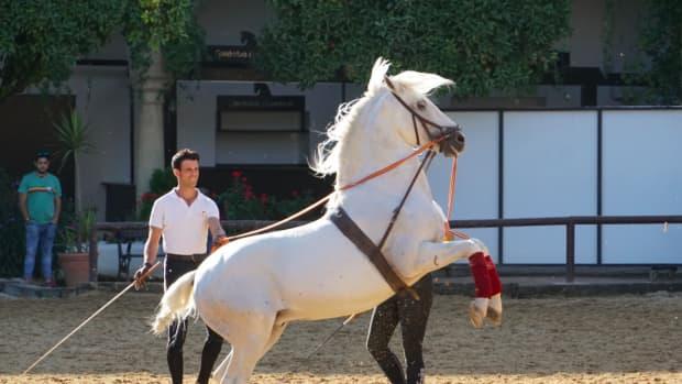 visiting-the-royal-stables-and-andalusian-horses-of-crdoba