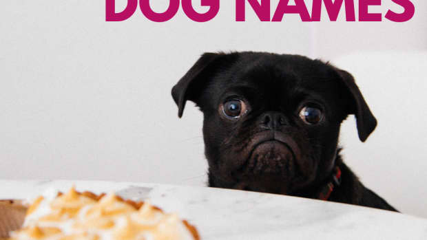 dog-names-that-are-food-inspired-for-foodies