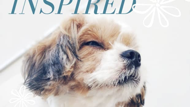 150-beautiful-flower-names-for-dogs