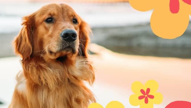 100-amazing-hawaiian-dog-names