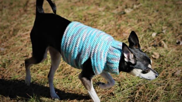 half-double-crochet-small-dog-sweater