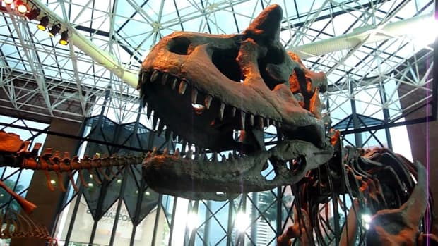 the-use-of-the-carnotaurus-horns